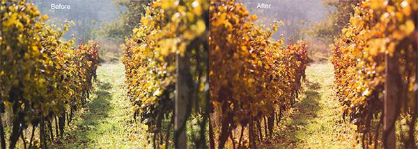 Fall Color Boost Photoshop Action (Custom)